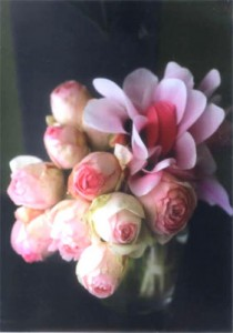 Takeda Masahiko Photographies